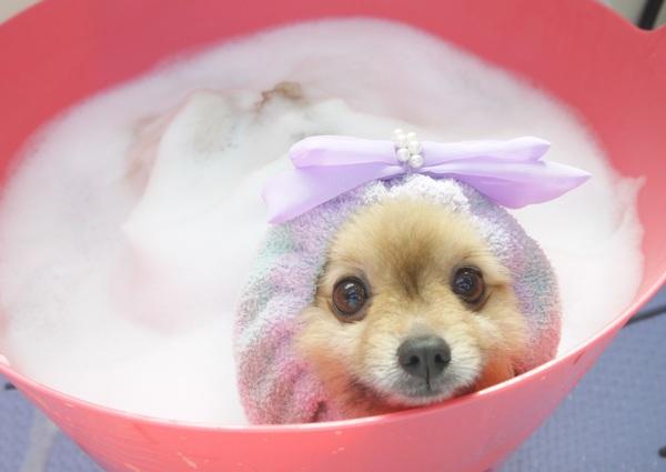 タルトちゃん ホイップ温泉のサムネイル